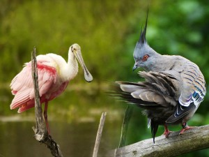 Top 5 Bird Sanctuary Karnataka Bird Lovers