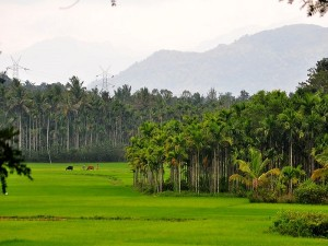 Top Weekend Getaways From Kannur Attractions Things To Do