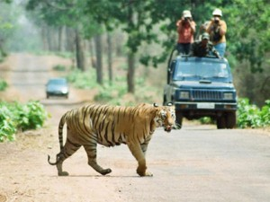 Tadoba National Park Maharashtra Timings Entry Fee Attractions And How To Reach