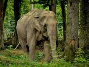 Top Wildlife Sanctuaries And National Parks Of Tamilnadu