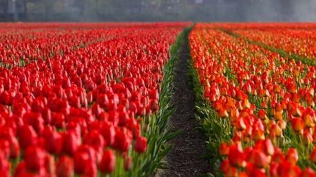 कश्मीर जाकर आनंद उठाएं इस खास फूलों के मेले का