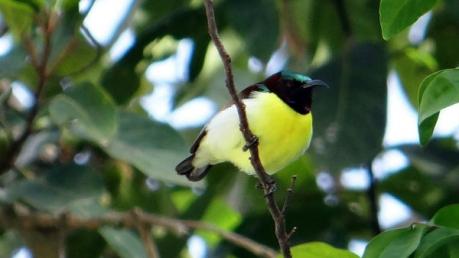 गोवा की इस बर्ड सैंक्चुअरी में इन पक्षियों की खूबियां जानेंगे तो मुह खुला का खुला रह जाएगा