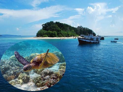 समुद्री जीवन करीब से देखना है तो करें इन जलीय अभयारण्यों की सैर