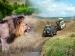 नाहरगढ़ में लॉयन सफारी का आनंद