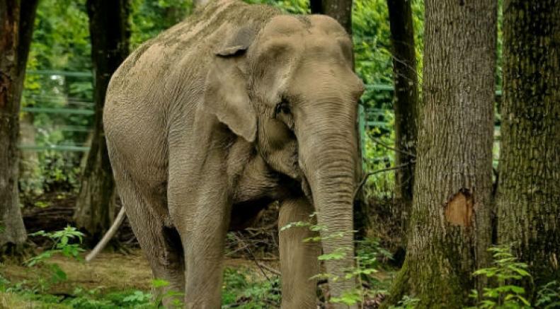 तमिलनाडु के वन्यजीव अभ्यारण्य: एडवेंचर का लें मज़ा