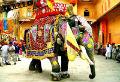 शाही महिमा की ओर बढ़ता हुआ कारवां राजस्थान